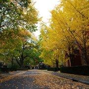 University_of_Melbourne